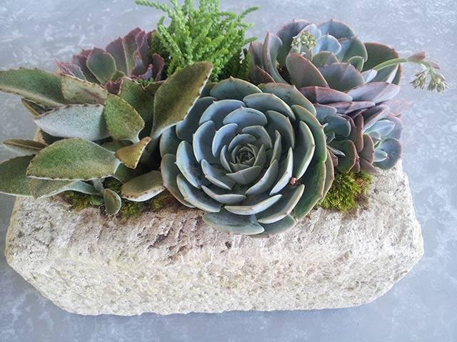 Succulent Indoor Plant Design Las Vegas