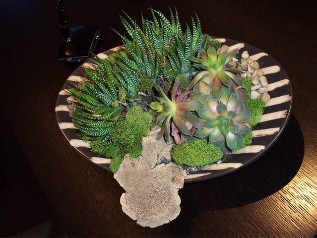 Succulent Plant Design Succulents For Home Amp Office